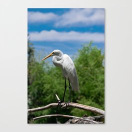 Great Egret Two - Utah Canvas Print