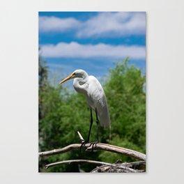 Great Egret Two - Utah Canvas Print