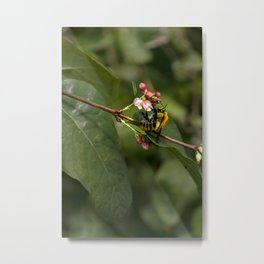 Photograph of a bee collecting nectar in a local park Metal Print