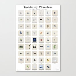 Taxidermy Thursdays: 52 Weeks of Wildlife Watercolor Paintings Canvas Print
