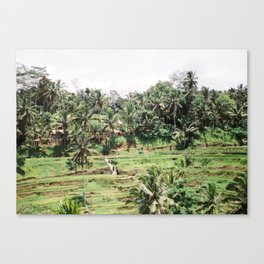 Tegalalang Rice fields near Ubud Bali, Indonesia | Travel film photography wall art Canvas Print