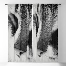 Portrait of a cat in black and white Blackout Curtain