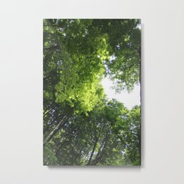 Summer Canopy Metal Print
