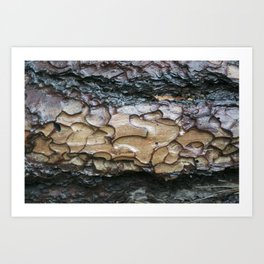 This is Bark Art Print