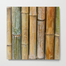 Weathered Bamboo Metal Print