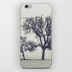 bleak trees... iPhone & iPod Skin