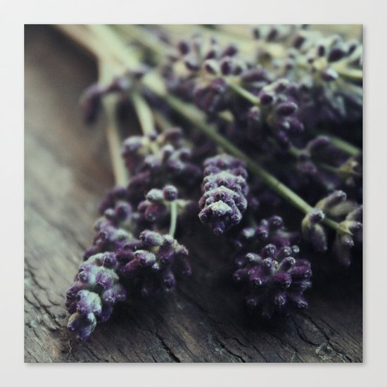 Lavender Harvest Canvas Print