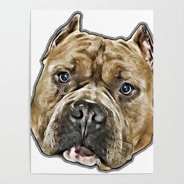 American Bully pitbull dog Poster