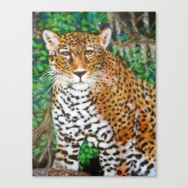 Mesmerizing Jaguar Canvas Print