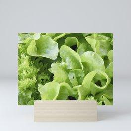 Lettuce 1 Mini Art Print