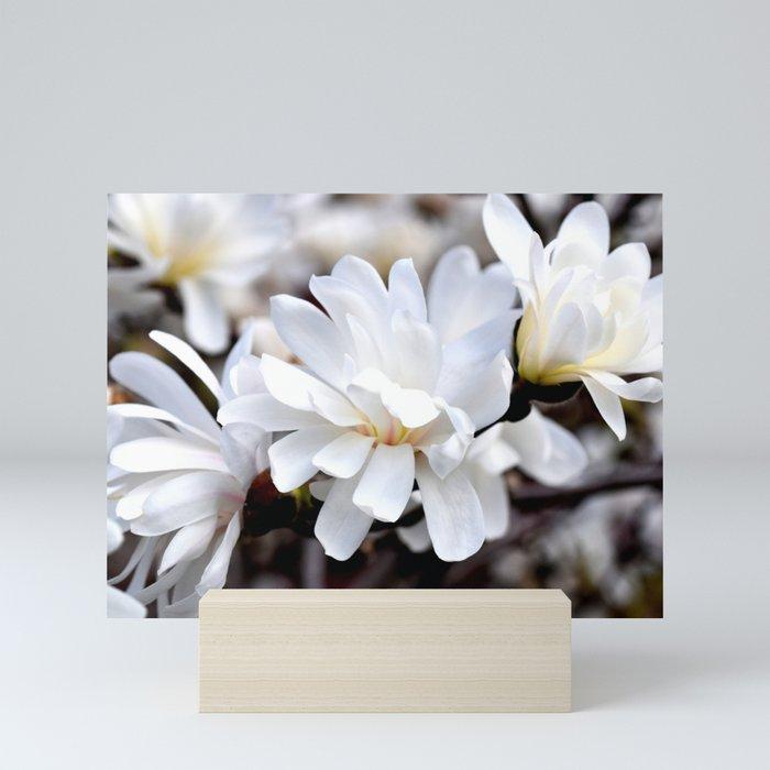 Magnolia 5 Mini Art Print