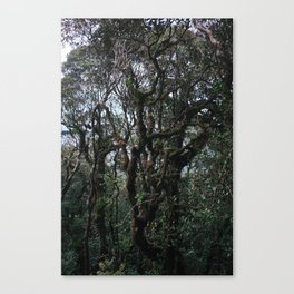 MOSSY FOREST II Canvas Print