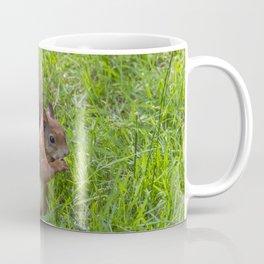 Red Squirrel. Coffee Mug