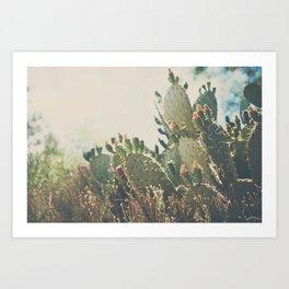 desert prickly pear cactus ... Art Print