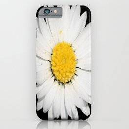 Top View of a White Daisy Isolated on Black iPhone Case