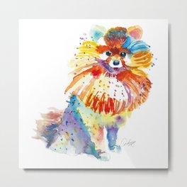 Lovely Pomeranian Metal Print