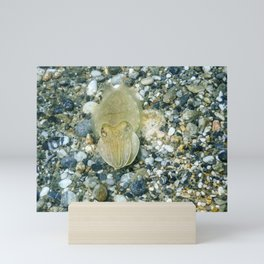 Cuttlefish Camouflage. Cuttlefish Swimming Underwater. Mini Art Print