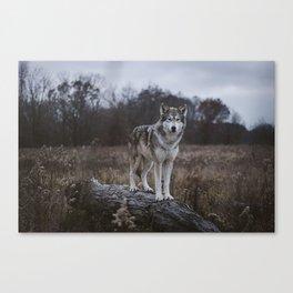 Wolf on Log Canvas Print