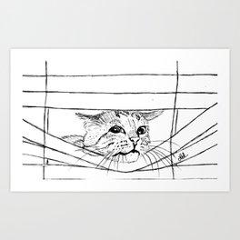 Cat in venitian blind Art Print