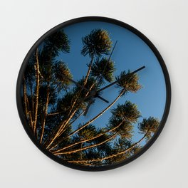 Araucaria Branches Wall Clock