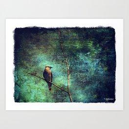 Cedar Waxwing Art Print