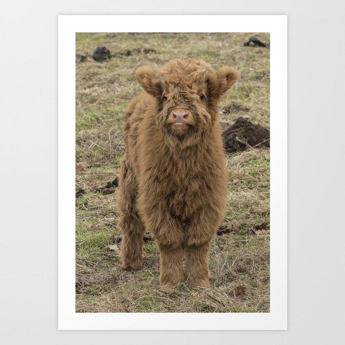 Scottish Highland baby cow Kunstdrucke