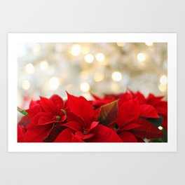 A Bouquet of Poinsettia Flowers Art Print