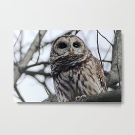 My first owl :) Metal Print