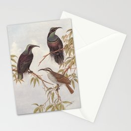 Neville W. Cayley - What Bird Is That? (1931) - Magnificent Riflebirds Stationery Cards