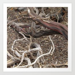 TEXTURES - Manzanita in Drought Conditions #3 Art Print