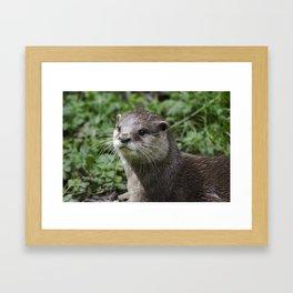 Asian short clawed otter Framed Art Print