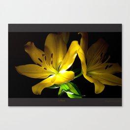 lillies  Canvas Print