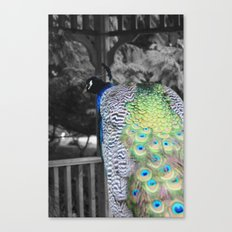 Fascinator Canvas Print