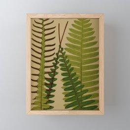 Four Ferns Framed Mini Art Print