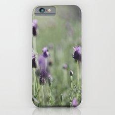 lavender in summer light Slim Case iPhone 6s