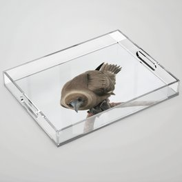 Curious young boobie Acrylic Tray