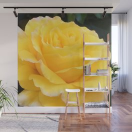 My Yellow Rose Wall Mural