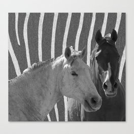 Two Horses Black & White Canvas Print