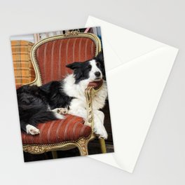 Sleeping Dog Portrait in an Antiques Shop - Pet Photography Stationery Cards