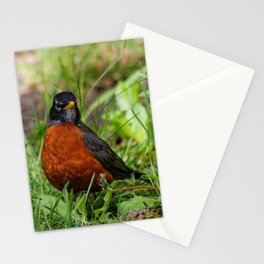 A Curious American Robin Stationery Cards