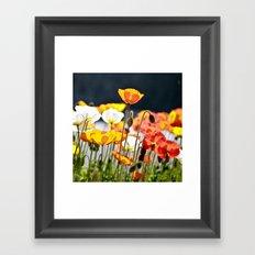 Italian Poppies Framed Art Print