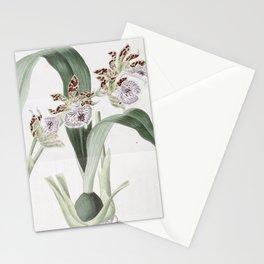 Flower 1433 eulophia mackaiana Mr Mackay s Eulophia15 Stationery Cards