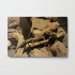Scales & stones Metal Print