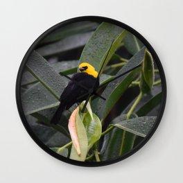 National Aviary - Pittsburgh - Yellow Hooded Blackbird Wall Clock