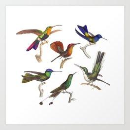 Six Colorful Hummingbirds Art Print