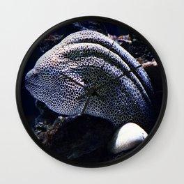 Honeycomb Moray Eel Wall Clock
