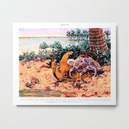 Tahiti Crabs Metal Print