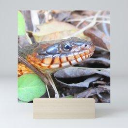 Watercolor Snake, Red-bellied Water Snake 02, Merchants Millpond, North Carolina Mini Art Print