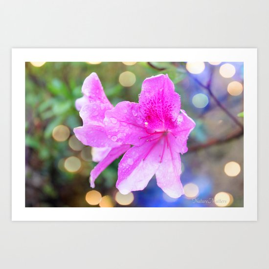 pretty purple garden flowers. nature is beautiful. floral photo art. Art Print