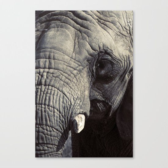 ELEPHANT OH MY! Canvas Print
